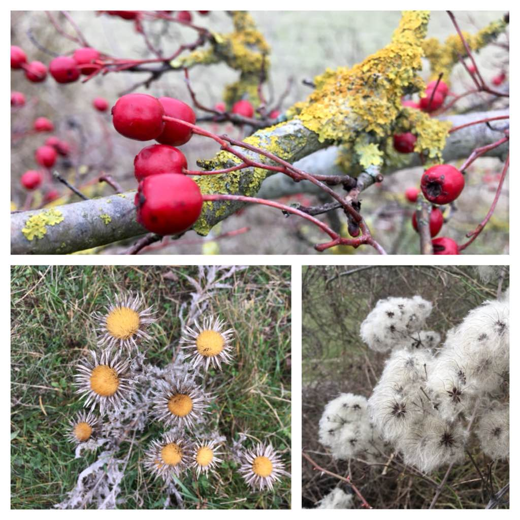 Winter seeds and berries