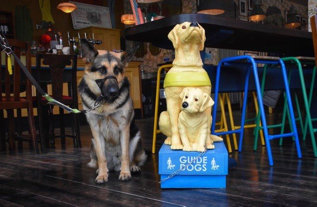 Raising money for Guide Dogs at Berro Lounge Photo courtesy of Mark Knight