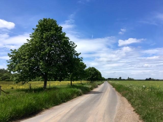 Road between Long Wittenham and Little Wittenham