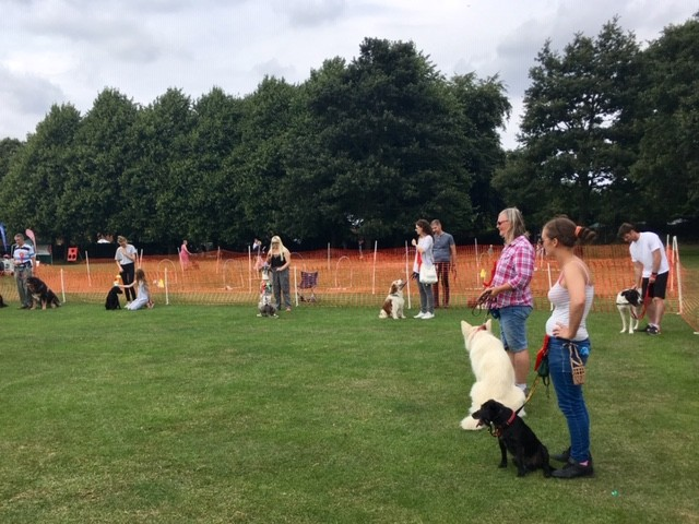 Dog show, Didcot summer fayre