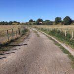 Walks near Didcot: Hagbourne moor