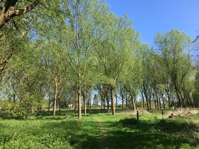 Woodland near Blewbury Mill