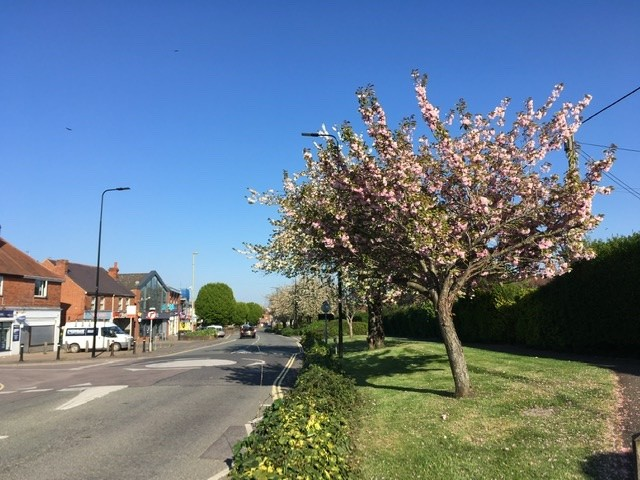 Blossom on the Broadway, Didcot