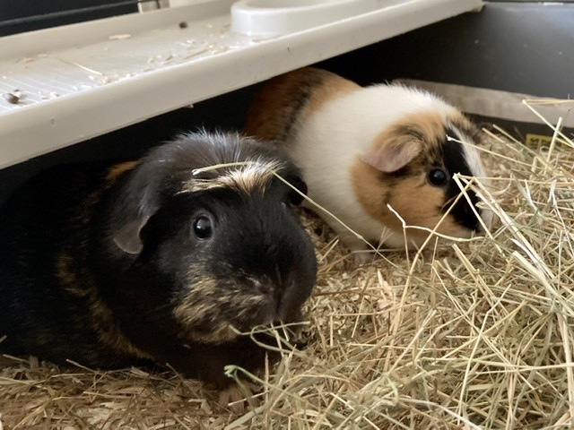 Lola and Munchy
