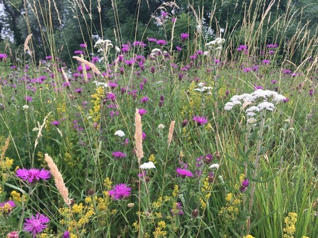 Wildflowers along the old railway embankment