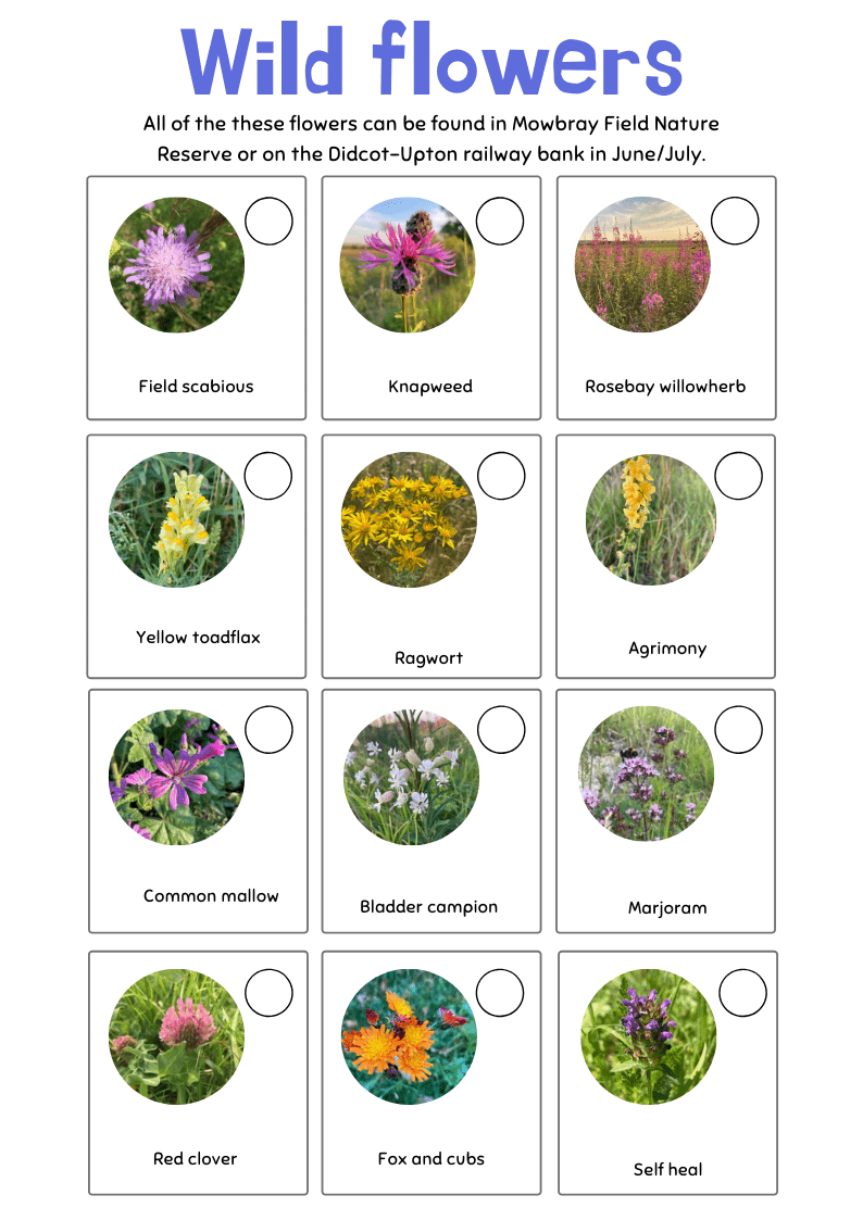 Didcot wildflower spotter sheet