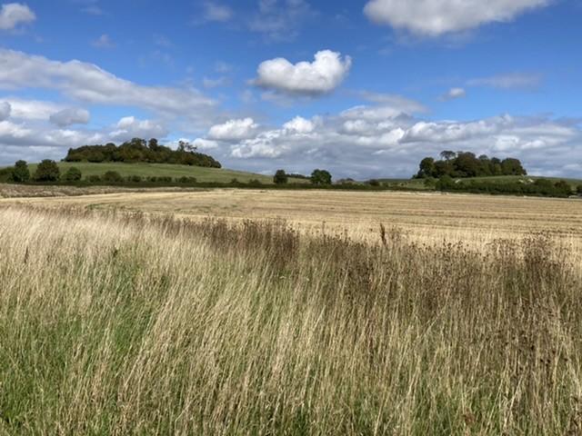 View towards Wittenham Clumps
