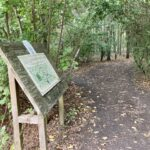 Woods to visit near Didcot