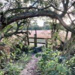 Walks near Didcot: East Hendred to Ardington circular walk