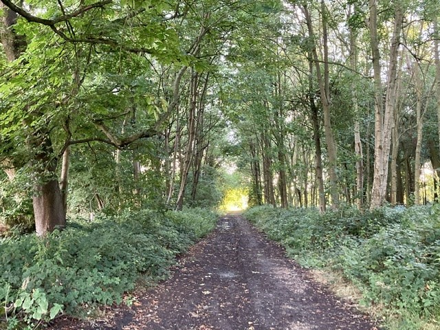 Woodland between West Hendred and Ardington