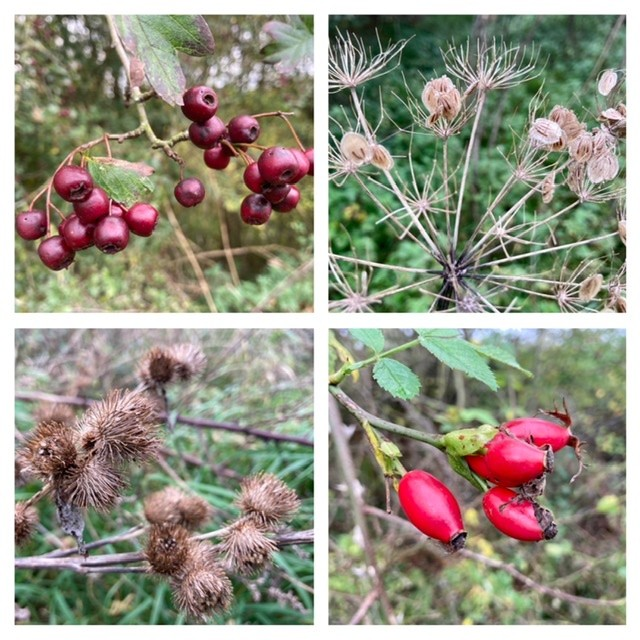 Autumn berries and seeds, Mowbray Field