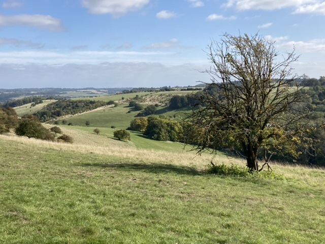 Looking over to Moulsford Downs