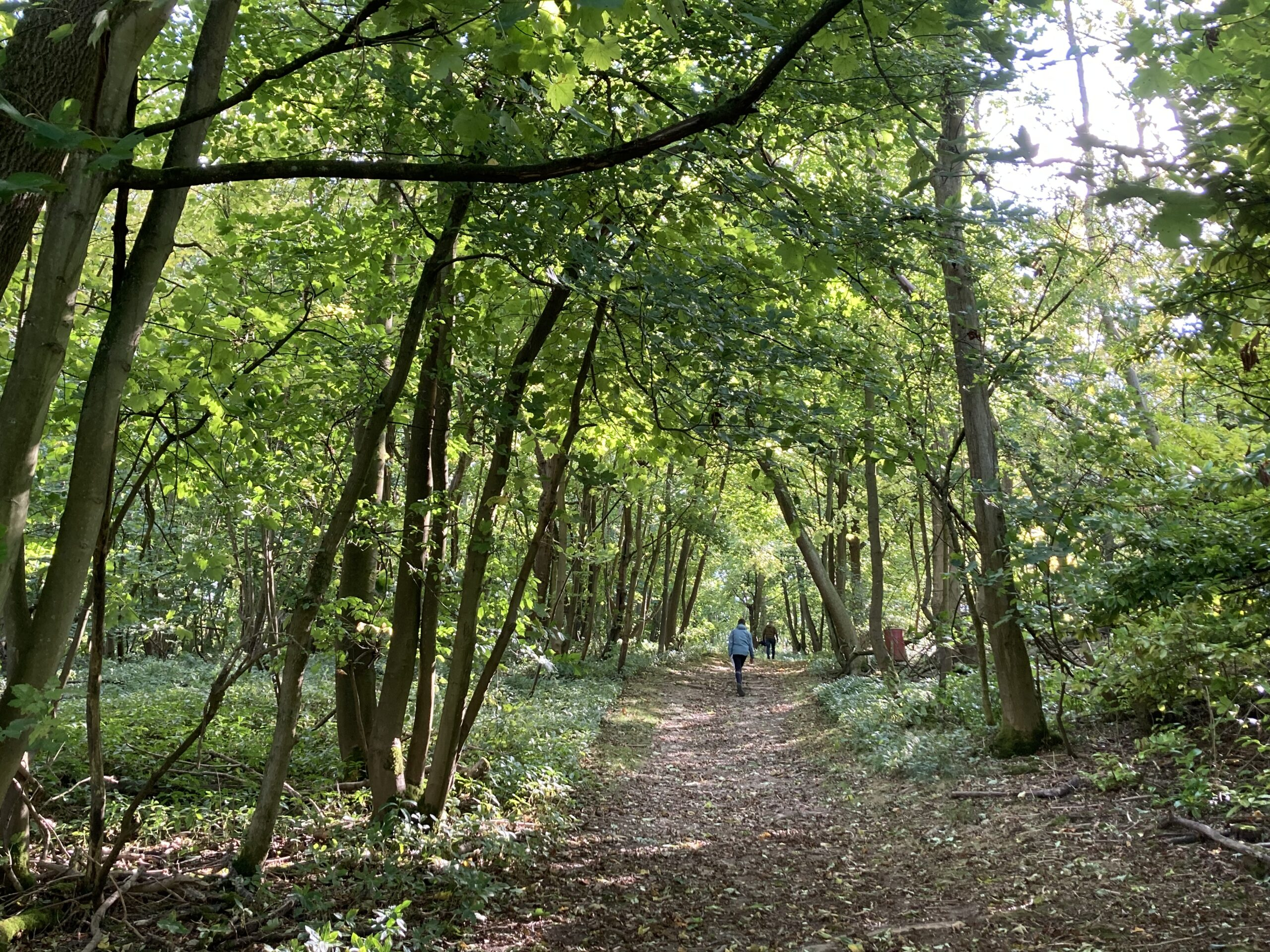 Unhill Wood