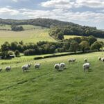 Walks near Didcot: Unhill Wood circular, near Moulsford