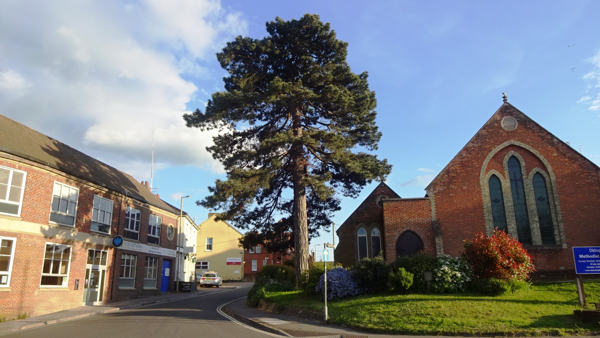Corsican pine, Methodist Church. Image by Geoff Bushell.