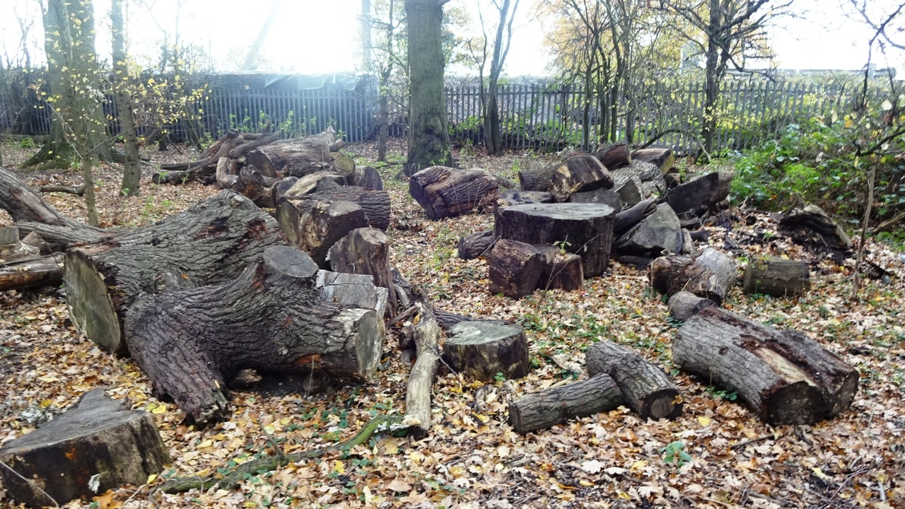 Felled storm damaged oaks, Oakland Lea © Geoff Bushell