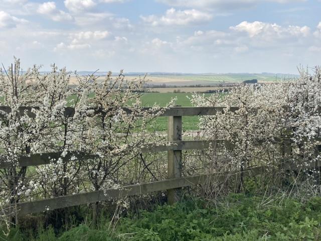 Blossom on the Ridgeway