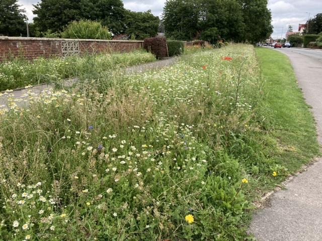 Didcot wildflower verge, July 2021