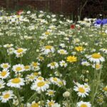 Didcot Town Council wildflower beds
